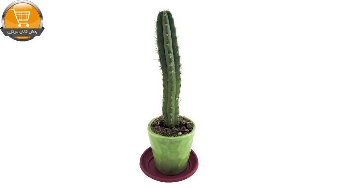 پیلو سرئوس سایز 10 | پخش کالای مرکزی