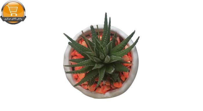 هاوارتیا گورخری سایز 10 با گلدان سفالی | پخش کالای مرکزی